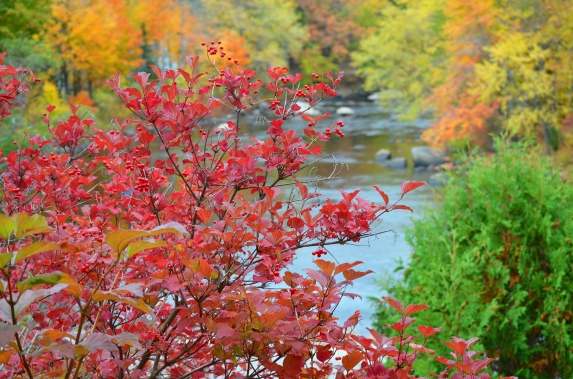 Henniker red bush and river-recolor-small