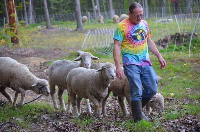 James with sheep 2015